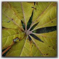 green leaf10817881_855450017851243_591402605_n